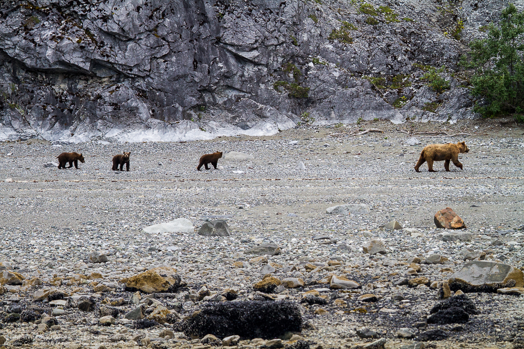 Alaska2012-0729-3149
