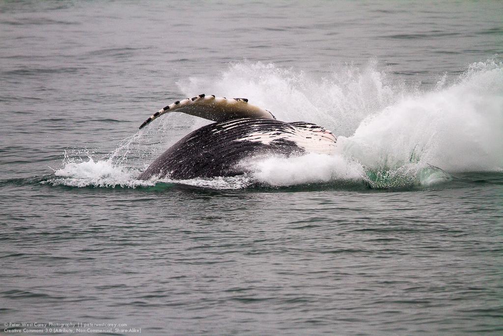 Alaska2012-0801-5291