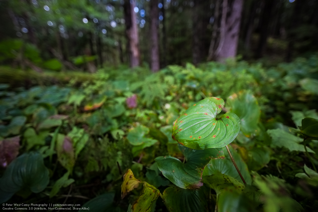 Alaska Rainforest Floor