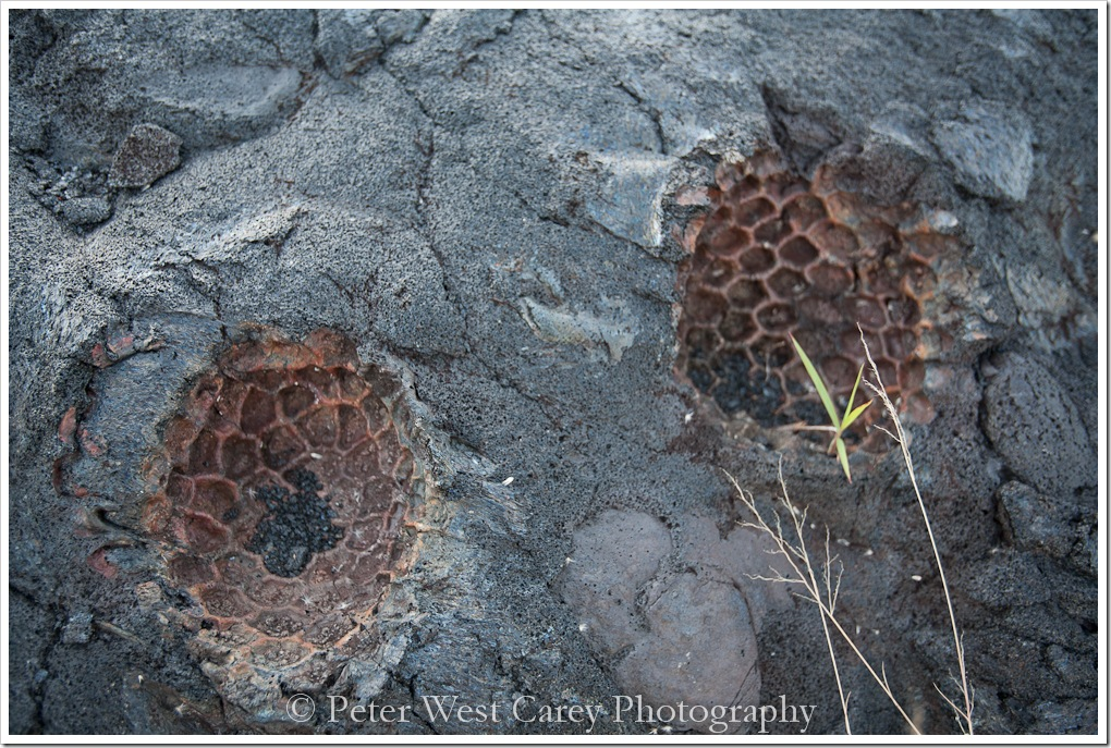pineapples-burnt-by-lava