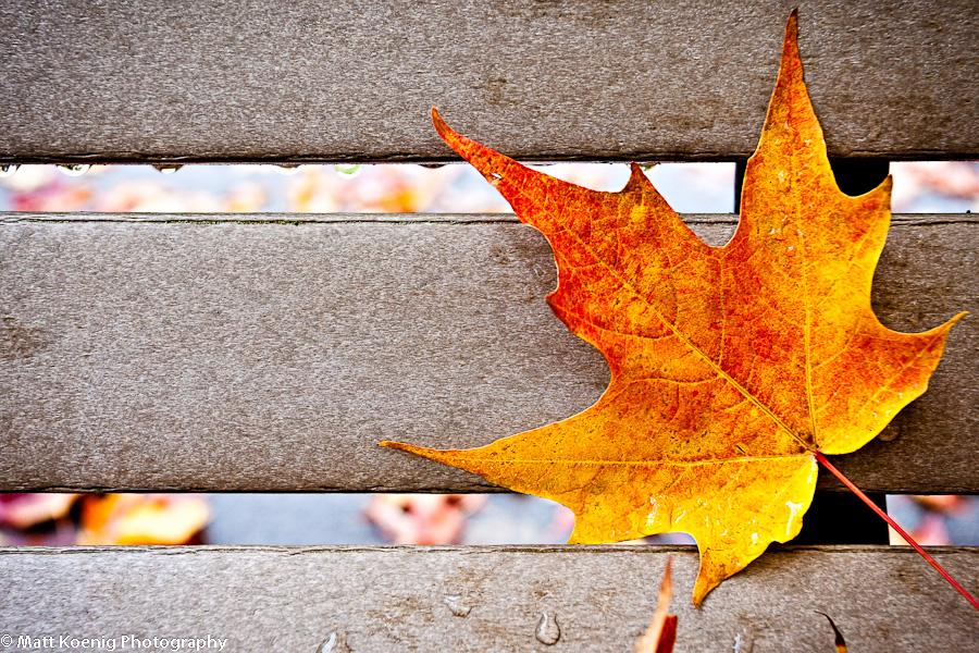 Day 260: Park Bench Leaf
