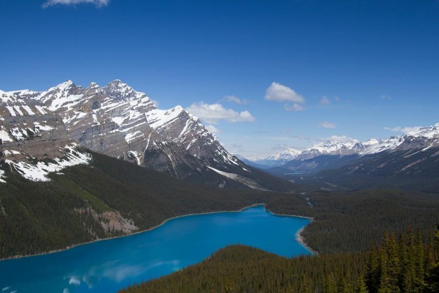 View over Peyto Lake. One of Icefields Parkway's many stunning turquoise lakes situated amongst the soaring peaks of the Canadian Rockies.