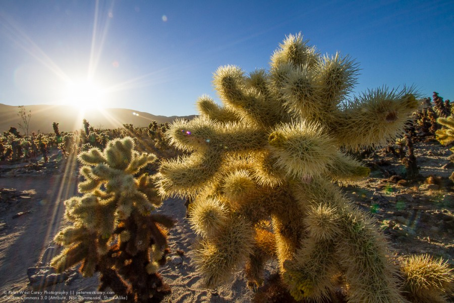 Peter-West-Carey-JoshuaTree2014-1223-7171